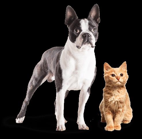 gato_cachorro_form